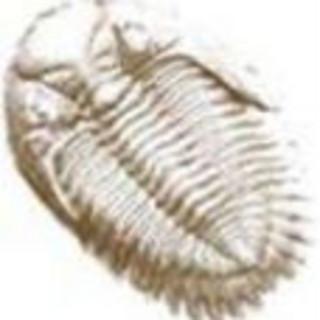 泰安三叶虫