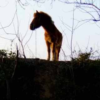 小马驹0921